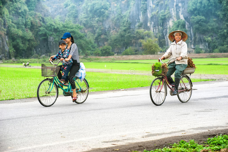 Mujer vietnamita en el sombrero cónico en la bicicleta que va para el trabajo en ric fotografía de archivo libre de regalías