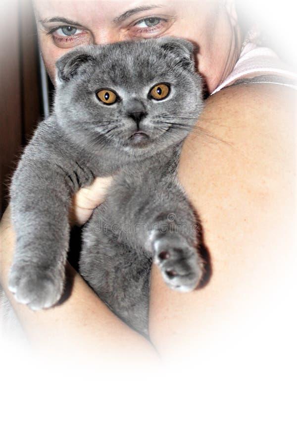 Mujer y gato Comparación de la expresión de los ojos fotografía de archivo