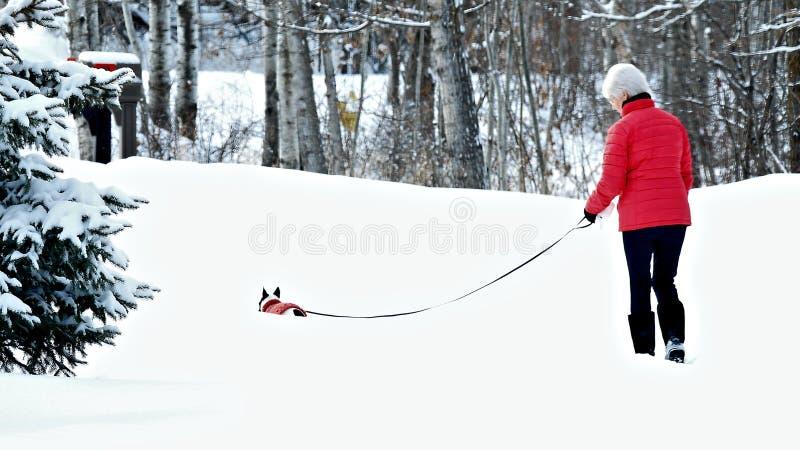 Mujer y perro en hacer juego las chaquetas rojas que caminan en nieve después de tormenta del invierno foto de archivo libre de regalías