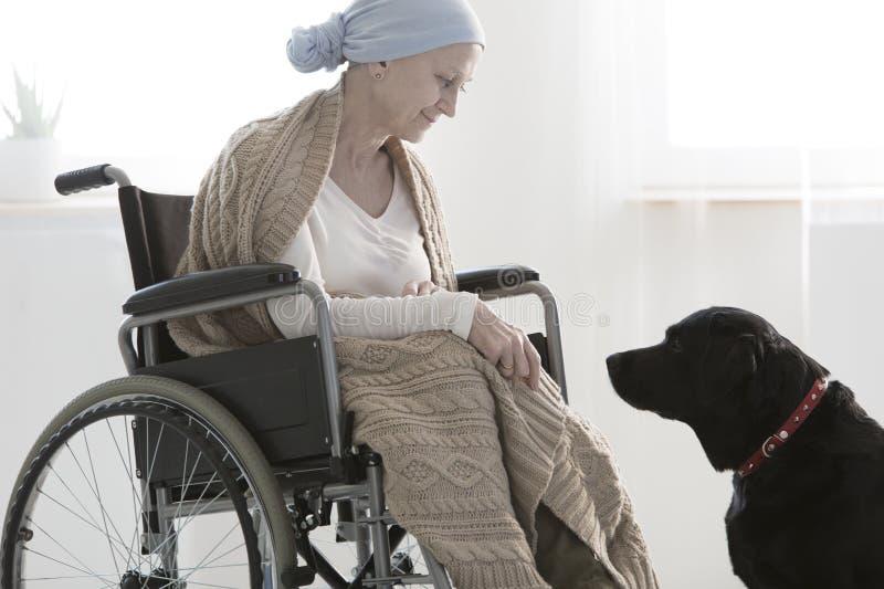 Mujer y un perro foto de archivo libre de regalías