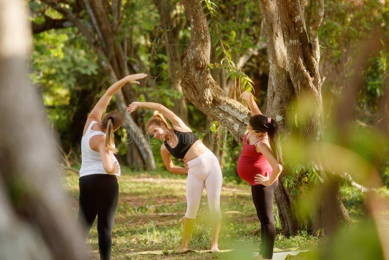 Mujeres de Exercising With Pregnant del instructor de la yoga en parque fotos de archivo libres de regalías