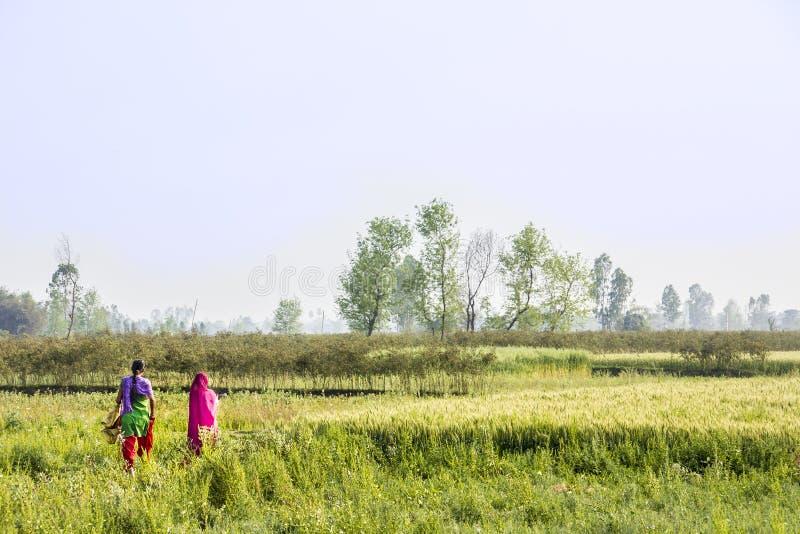 Mujeres del Nepali en el país imagen de archivo libre de regalías