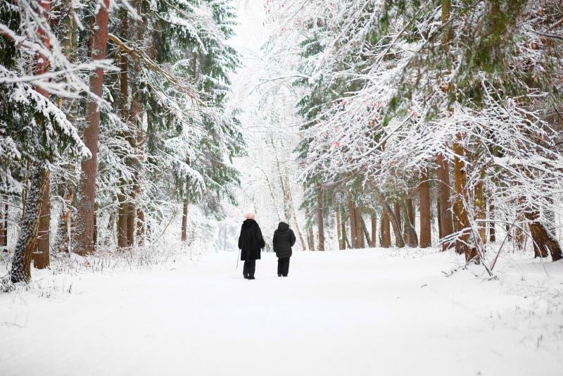 Mujeres del paseo dos en un bosque del invierno foto de archivo libre de regalías