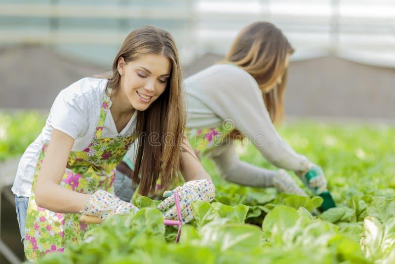 Mujeres jovenes en jardín foto de archivo