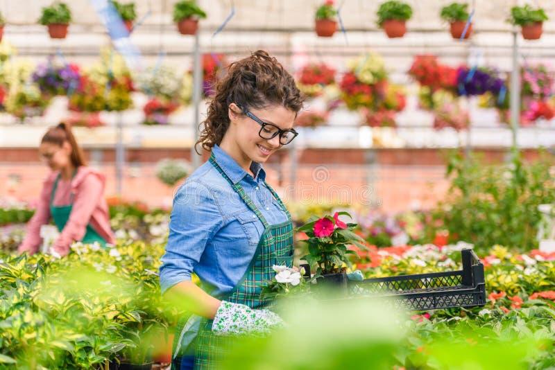Mujeres jovenes que trabajan en jardín de flores colorido hermoso imagen de archivo libre de regalías