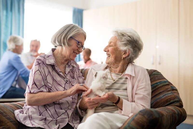 Mujeres mayores que hablan mientras que frota ligeramente el gatito foto de archivo