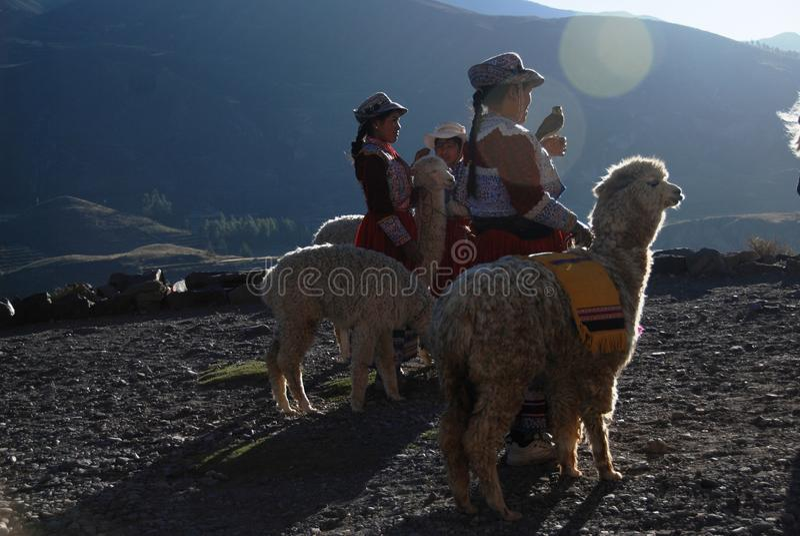Mujeres peruanas de la indigencia con los lamas foto de archivo libre de regalías