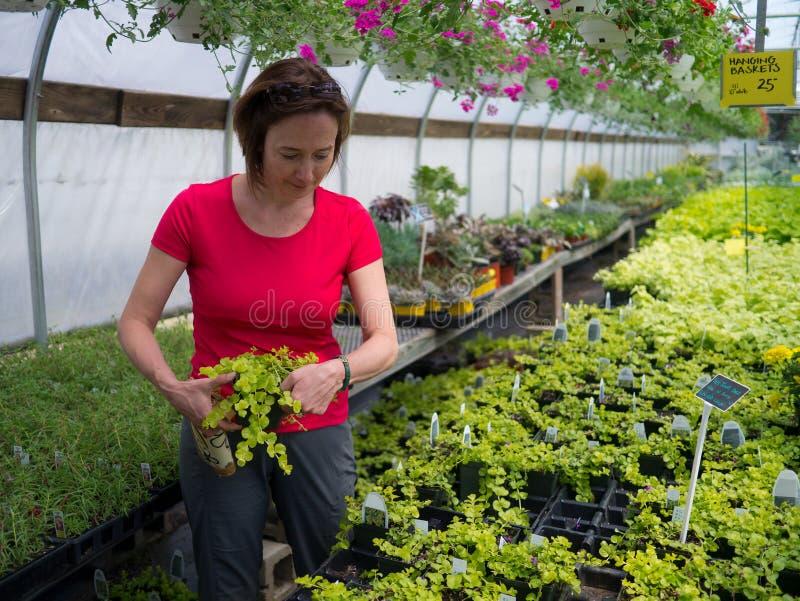 Mujeres que compran plantas en una casa verde imágenes de archivo libres de regalías