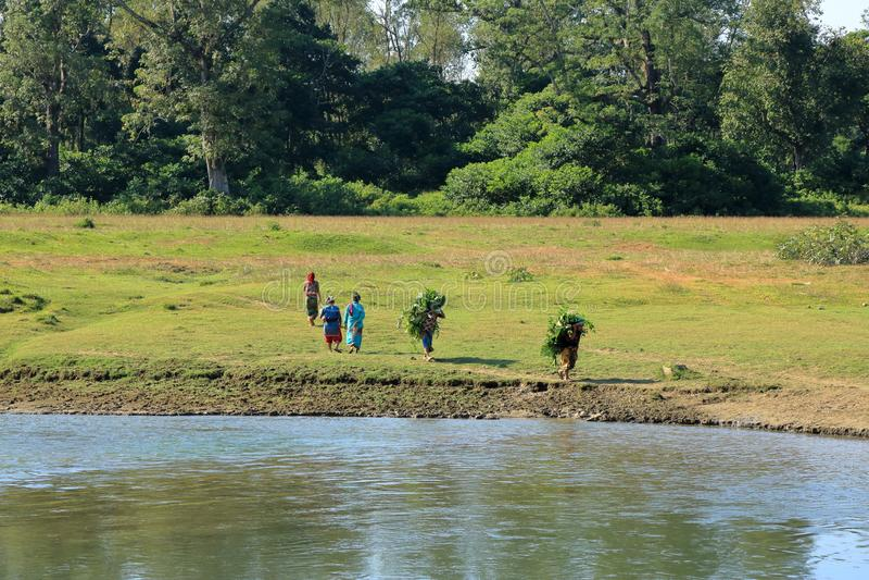 Mujeres que llevan el canal de las ramitas el río en Nepal fotografía de archivo