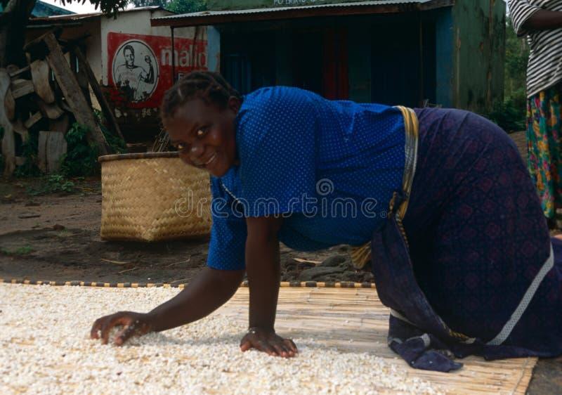 Mujeres que secan el grano en Malawi. foto de archivo libre de regalías