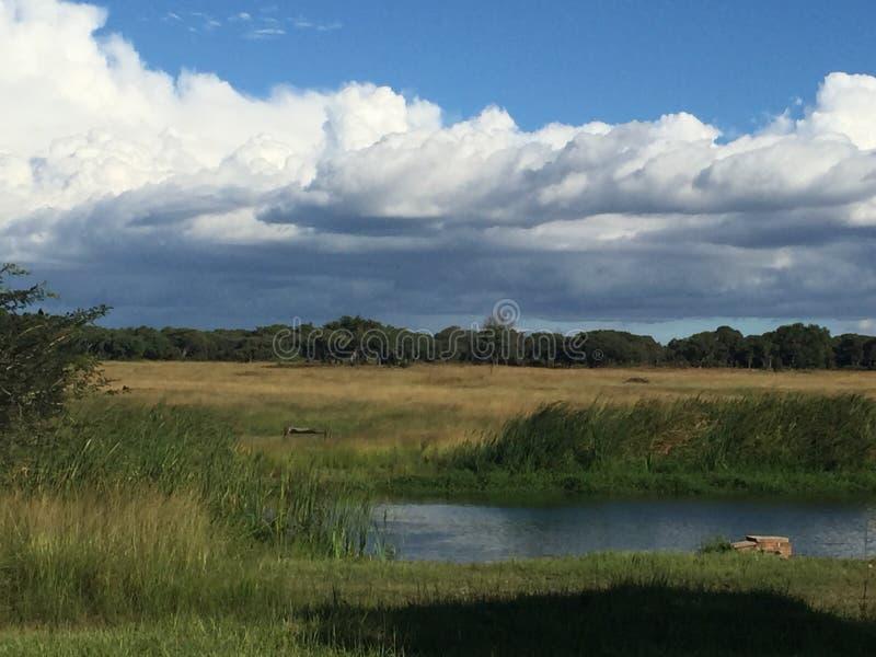 Mukuvusi skogsmarker, Zimbabwe royaltyfri bild
