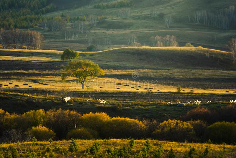 Hunting Ground and grassland in China. Mulan Hunting grounds is located in the northernmost part of Hebei. During the Qing Dynasty 1644-1911, the vast grassland stock photos