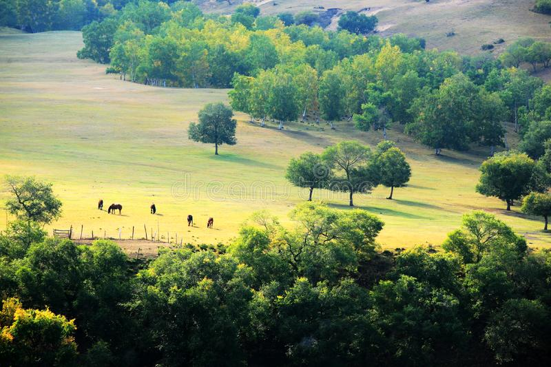 Mulan Paddock in early autumn stock photography