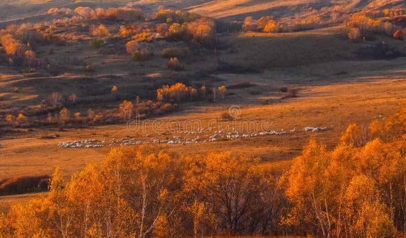 Mulan Wei Chang in autunno fotografia stock