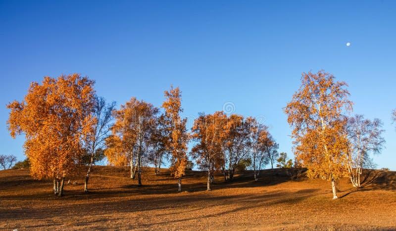 Mulan Wei Chang im Herbst stockfotos