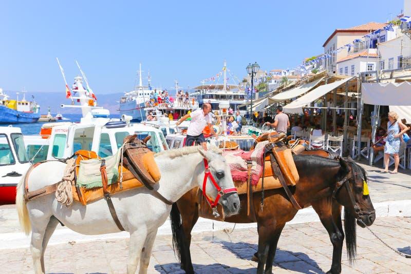 Mulas da ilha do Hydra - ilhas de Grécia imagens de stock royalty free