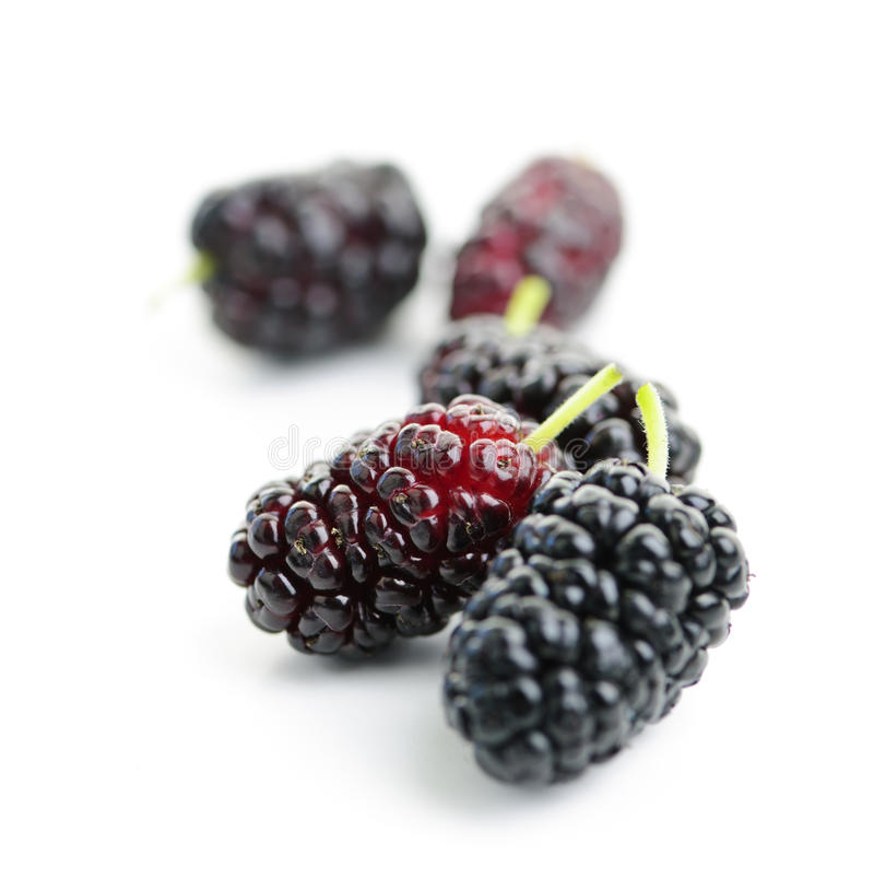Mulberries Close Up Royalty Free Stock Photos