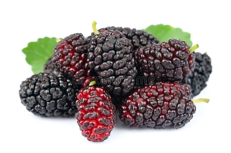 Mulberries com folhas foto de stock