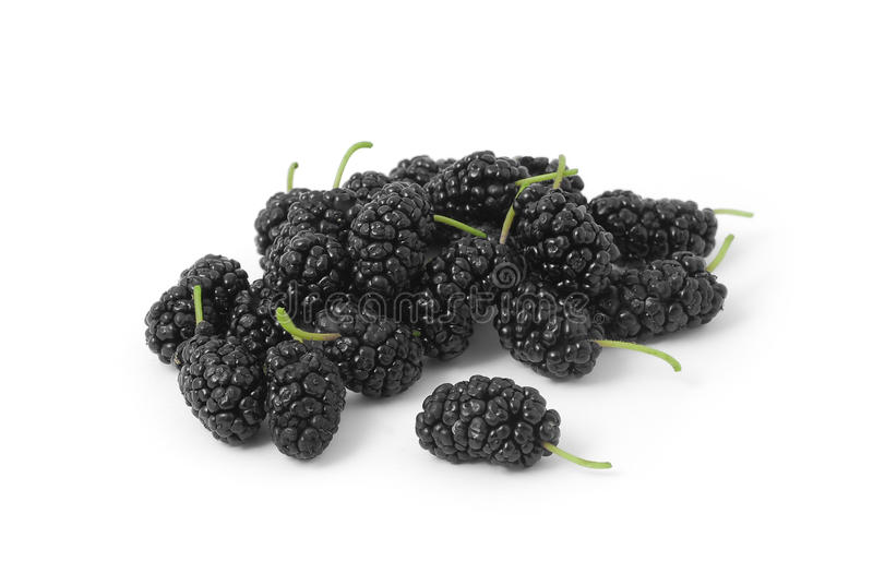 Mulberry foto de stock