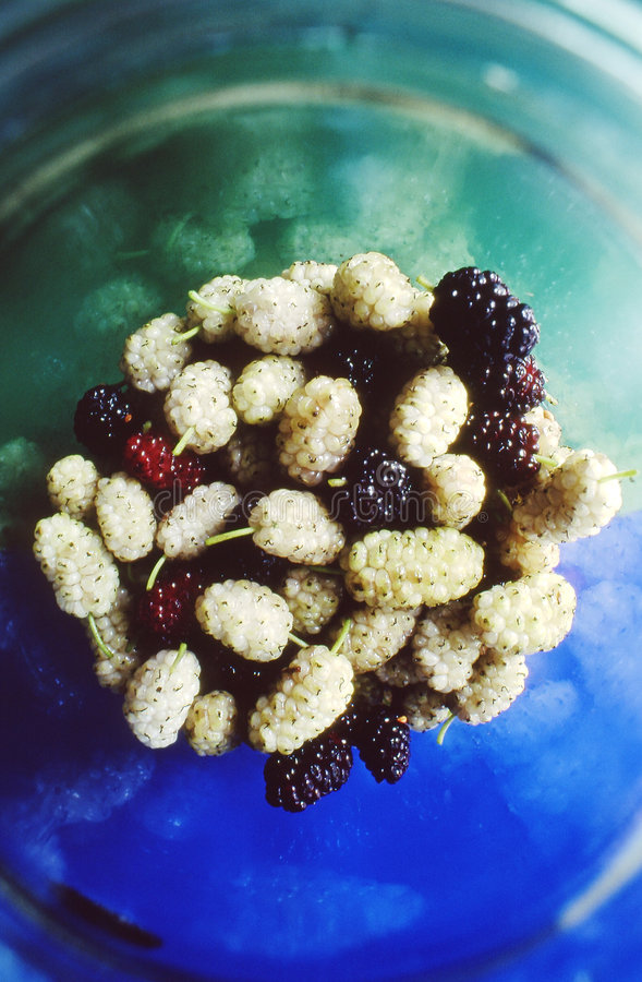 Mulberry stock images