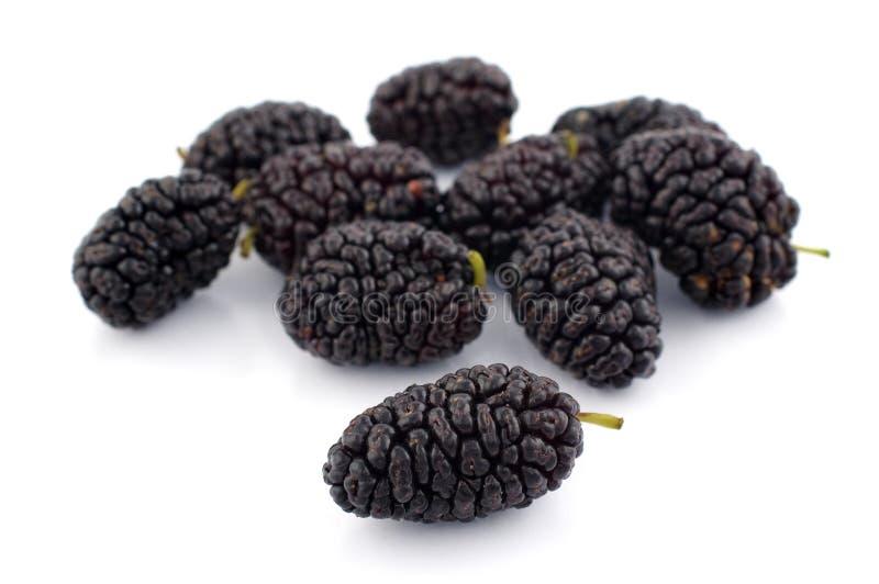 Mulberry fotos de stock
