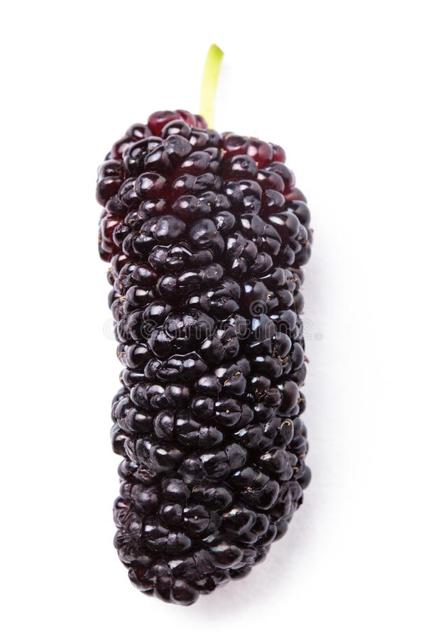 Mulberry berry. Close up on white background royalty free stock image