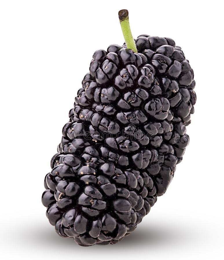 Mulberry berry. Isolated on white background. Clipping Path. Full depth of field stock photography
