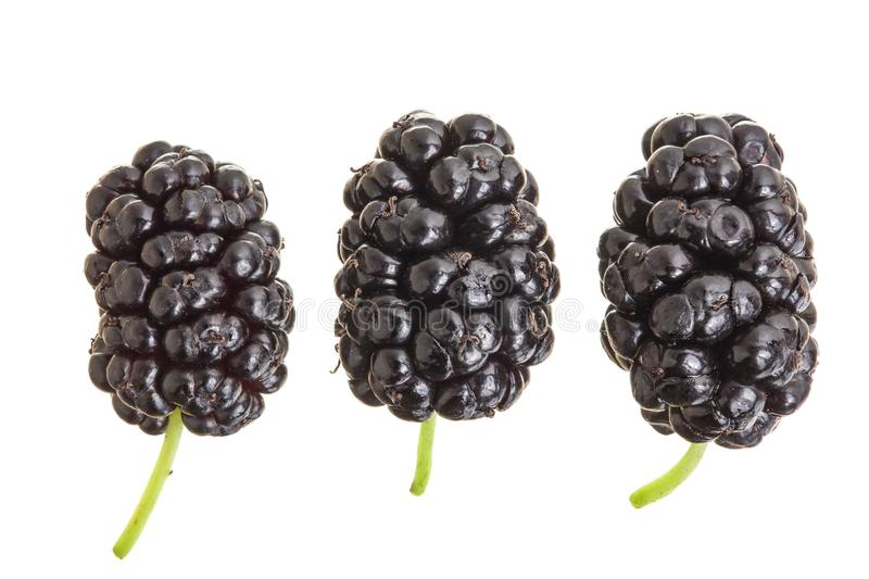 Mulberry berry isolated on white background. Top view. Flat lay.  royalty free stock photography