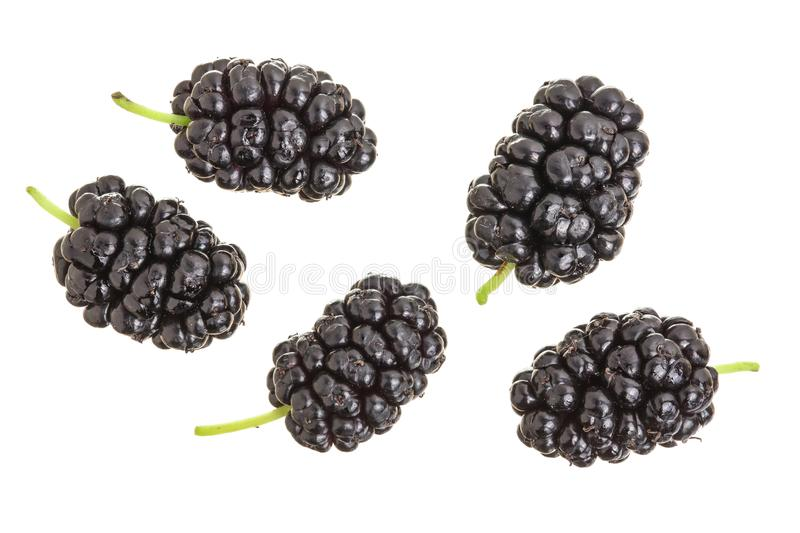 Mulberry berry isolated on white background. Top view. Flat lay.  royalty free stock photos