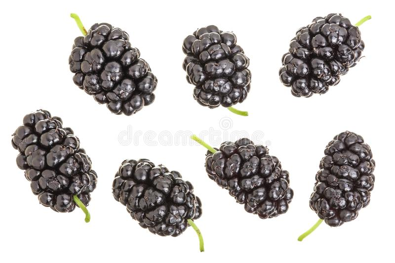 Mulberry berry isolated on white background. Top view. Flat lay.  royalty free stock images