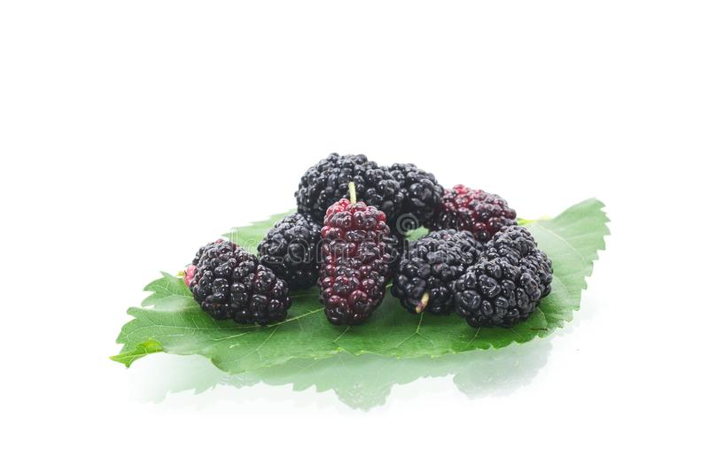 Mulberry berry with leaf isolated on white background stock photo