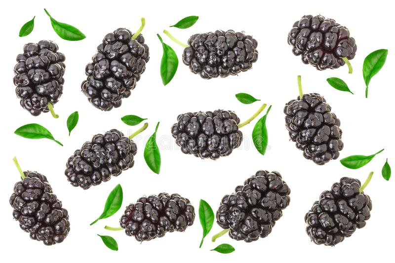 Mulberry berry with leaf isolated on white background. Top view. Flat lay.  stock photography
