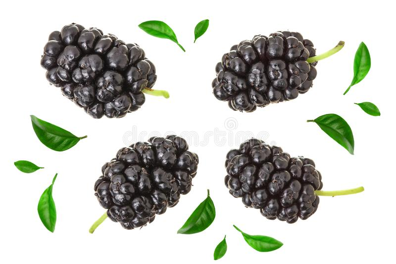 Mulberry berry with leaf isolated on white background. Top view. Flat lay.  stock image