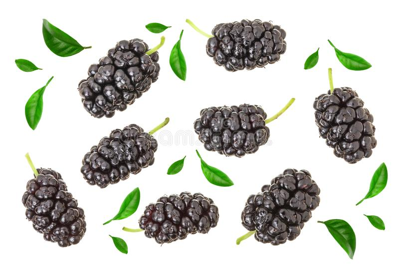 Mulberry berry with leaf isolated on white background. Top view. Flat lay.  royalty free stock image