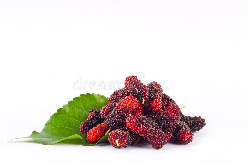 Mulberry berry with leaf on white background healthy mulberry fruit food isolated royalty free stock photography
