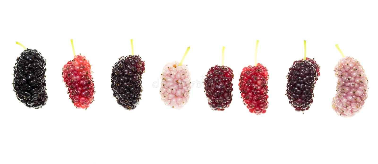 Mulberry berry on a white background royalty free stock images