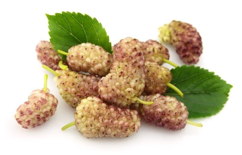 Mulberry com folhas fotos de stock