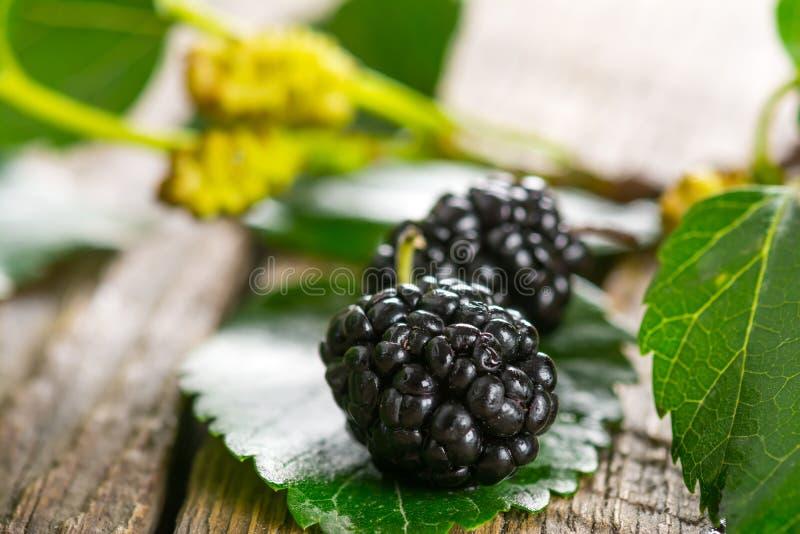 Mulberry stock photo