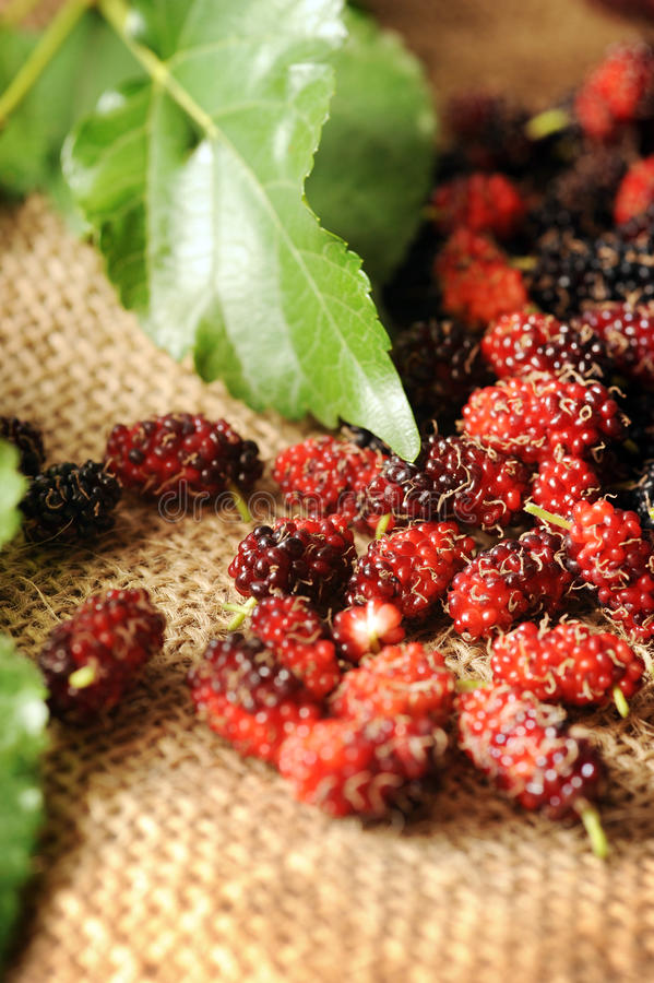 Mulberry Fruit Stock Images