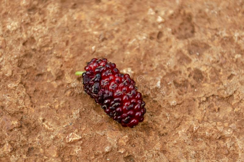 Mulberry Fruit On Concrete Surface stock photography