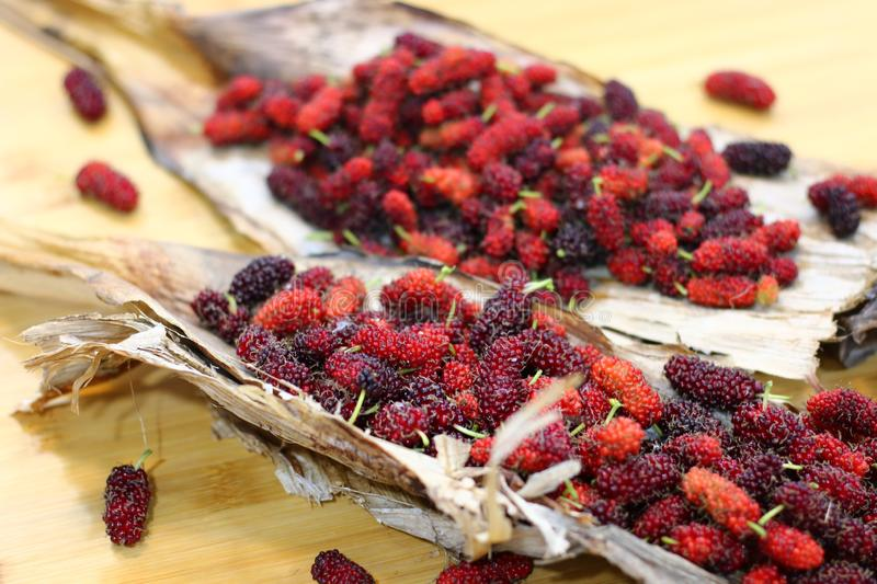 Mulberry fruits  Morus rubra  on wooden table. Red Mulberry fruits  Morus rubra  on wooden table stock image