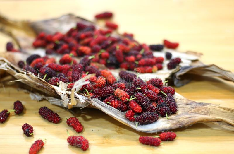 Mulberry fruits  Morus rubra  on wooden table. Red Mulberry fruits  Morus rubra  on wooden table stock images