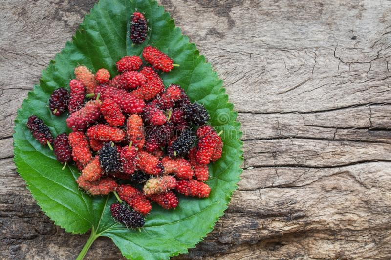 Mulberry fruits on table. Mulberry fruits on wood background royalty free stock photo