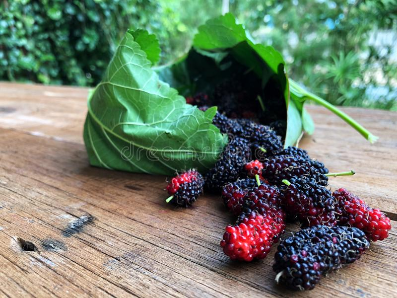 Mulberry and leaves on a wooden table with natural light,Red and black berry fruit. Beauty and healthy fruit stock photos