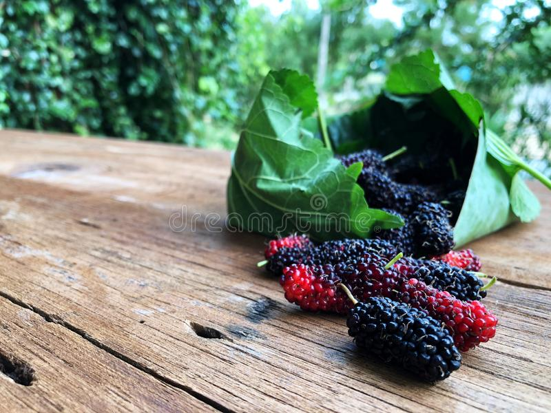 Mulberry and leaves on a wooden table with natural light,Red and black berry fruit. Beauty and healthy fruit stock images