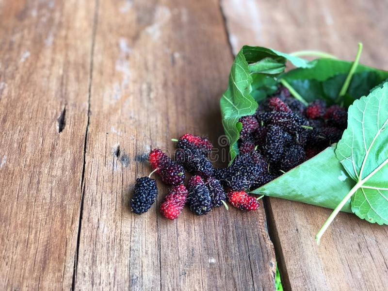 Mulberry and leaves on a wooden table with natural light,Red and black berry fruit. Beauty and healthy fruit stock photo
