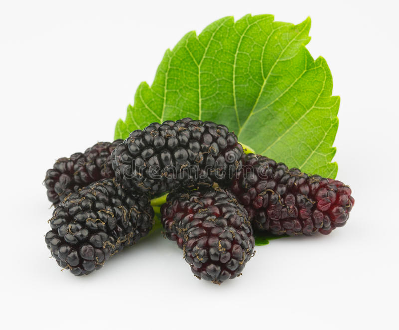 Mulberry maduro foto de stock royalty free