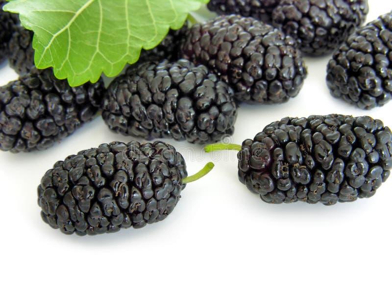 Mulberry preto imagens de stock