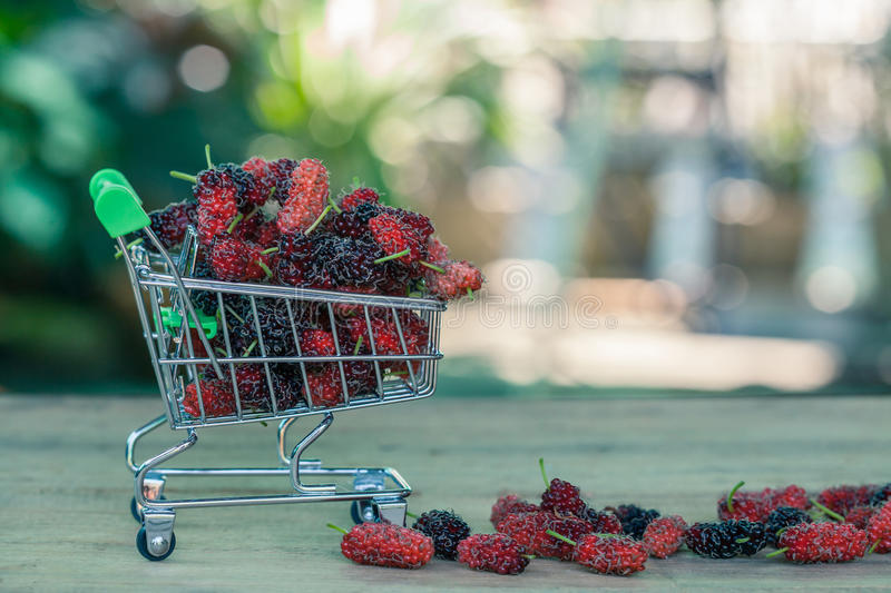 Mulberry in shopping cart stock image