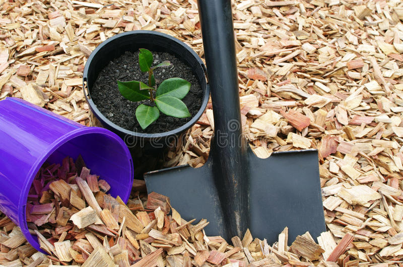 Mulch potted plant and tools stock photography